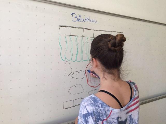 Fachbereich Biologie am WvS